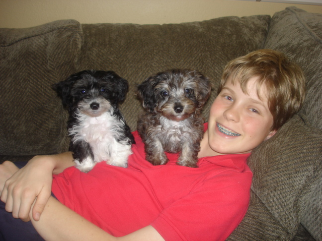 Christian With The Dogs